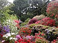 Rhododendrons and azaleas in full bloom, Bodnant Garden - geograph.org.uk - 331032.jpg