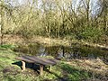 Risley Moss Nature Reserve - geograph.org.uk - 383022.jpg