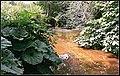 River Bollin (19090294546).jpg