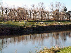 River Rother, East Sussex - The Rother near Iden, in the Rother Levels