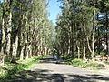 Road, Palace I, 02.jpg