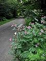 Road through Dog Kennel Wood near Swanton Novers - geograph.org.uk - 551078.jpg