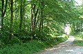Road to Barstibly - geograph.org.uk - 462705.jpg
