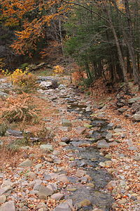 Roaring Run looking downstream.JPG