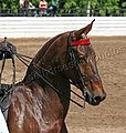 Rock Creek Spring Horse Show 2008 (2673757631).jpg