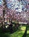 Roihuvuoren japanilaistyylinen puutarha.jpg