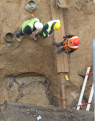 Horse burial - Excavating a Roman horse burial in London in 2006