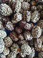 Rudraksh seeds.jpg
