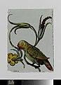 Ruit met een vogel met bloemenrank in de bek.jpeg