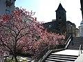 Ruprechtskirche stiege blüten.jpg