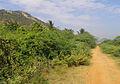 Rural Road to Swayambhuveswara Temple.jpg