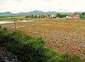 Rural village (7350513976).jpg