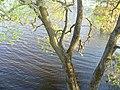 Rzeka Biebrza - panoramio - geo573.jpg