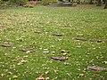 Südfriedhof über 500 Bombenopfer.JPG
