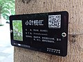 SZ 深圳 Shenzhen 羅湖 Luohu 寶安南路 Bao'An South Road tree Terminalia mantaly August 2018 SSG sign.jpg