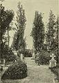 S 364 Abb 370 Partie aus dem Döblinger Friedhofe.jpg