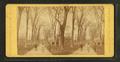 Salem Common, by Cousins, Frank, b. 1851.png