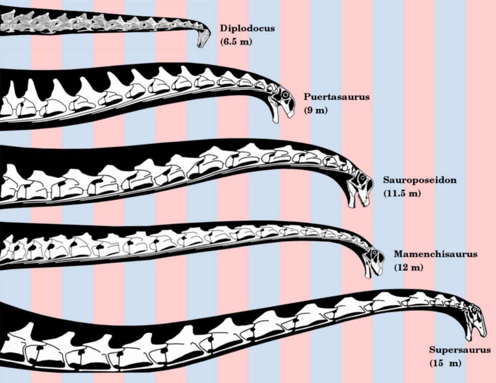 Sauropod neck reconstructions