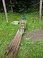 Scheidegger Wasserfälle - Streichelzoo (4).jpg