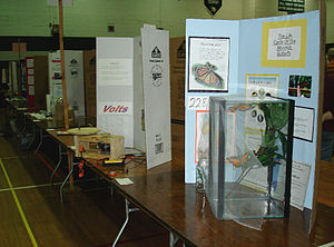 Display board - Posters and display boards at a science fair