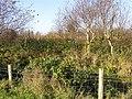 Scrubland, Donaghanie - geograph.org.uk - 1541666.jpg
