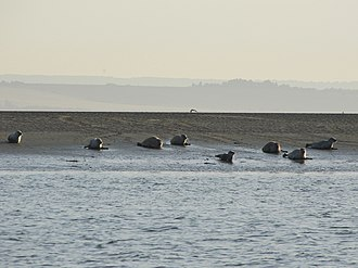 Southend-on-Sea - Seals off Southend