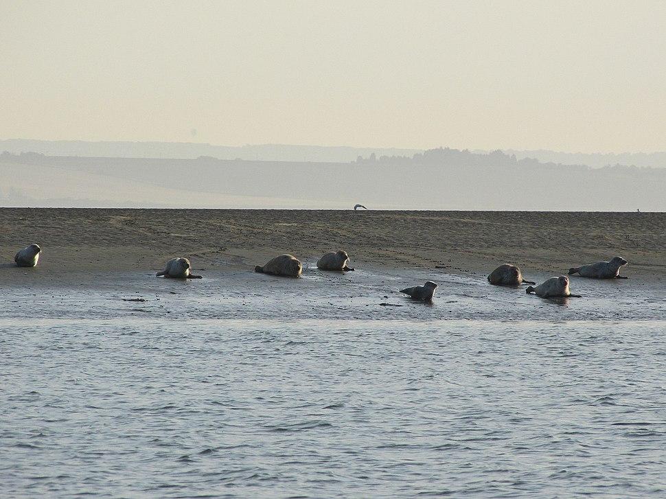 Seals off Southend