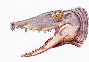 Secodontosaurus obtusidens head