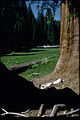 Sequoia and Kings Canyon National Parks SEKI3848.jpg