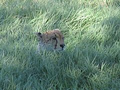 Serengeti National Park-108459.jpg