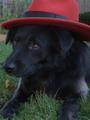 Shadowdog.png