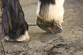 Shire Feet!.jpg