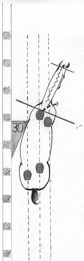 Shoulder-in - The horse, moving on three tracks, is bent into the direction of travel, at an angle of 30° from the rail, with the neck being straight.