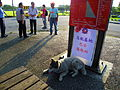 Shuttle Buses Stop at TRA Taitung Station with Grey Husky 20130601.JPG