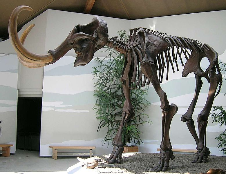 File:Siegsdorfer Mammut.jpg