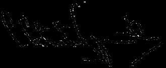 Simeon Saxe-Coburg-Gotha - Image: Signature of Simeon Saxe Coburg Gotha