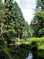 Silver Falls State Park 01.jpg