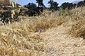 Single thread-leaved brodiaea at Glendora Community Conservancy (35361673981).jpg