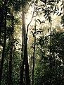 Sinharaja Rainforest.jpg