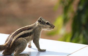 Sitting squirrel.jpg