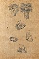 Six heads of birds; cocks, parrots and pigeons. Drawing, c. Wellcome V0009143EL.jpg