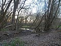Small Pond in Warner Park - panoramio.jpg