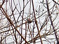Small bird with long tail on the tree.jpg