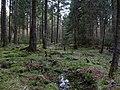 Small stream in the Taunus 4.jpg