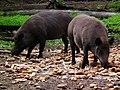 So viele Brötchen Wildpark Alte Fasanerie Juni 2012.JPG
