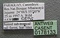 Solenopsis iheringi casent0178133 label 1.jpg