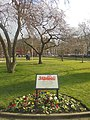 Solidarność memorial tree, Park Square, Leeds (22nd February 2018) 002.jpg