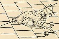 Каталепсия курицы[3]