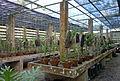 Soroa orchidearium serre.JPG