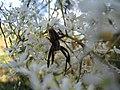 Spider (5377753554).jpg
